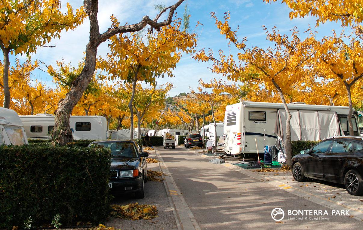 Árboles del camping en otoño