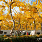 Poda árboles en Bonterra Park
