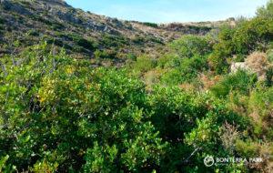 Vegetación mediterránea vía verde Benicàssim a Oropesa del Mar